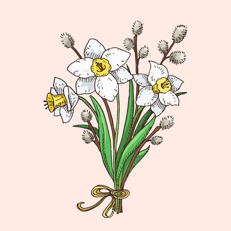 Hand drawn narcissus and willow branches bouqet. Beautiful yellow and white flowers. Spring symbol. Illustration