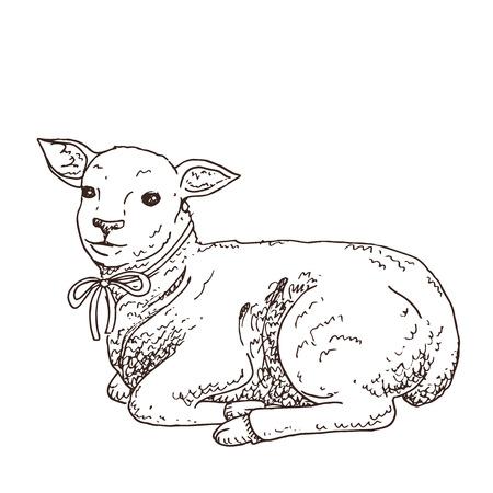 Cordero dibujado a mano en blanco y negro. Lindo animalito. Símbolo de pascua. Ilustración de Doodle