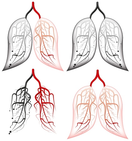 lungs Illustration