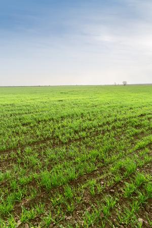 photo plants swaying in the wind field in Ukraine