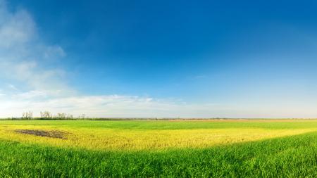 bright colorful picture ukraine field
