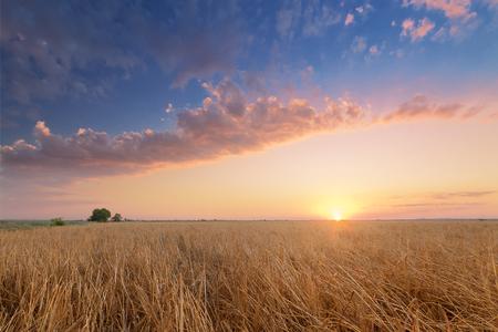 wilderness bright sky before sunset Stock Photo