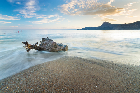 log on the shore of the beach  bright morning sunrise morning without the sun