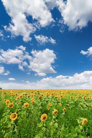 bright summer photo field of Ukraine Stock Photo