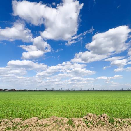 clouds over the field bright summer photo Ukraine