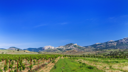 Solar distant Crimea walking tour / summer vineyards with mountains in the background Imagens