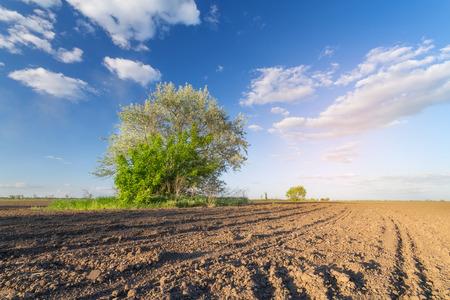 tree in the field Foto de archivo