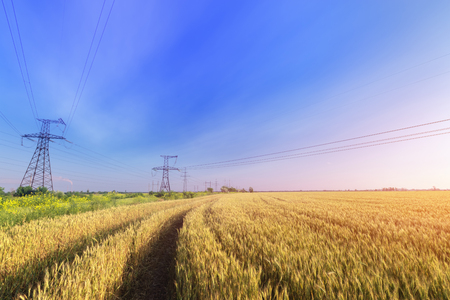 power line bright summer day  ripe wheat bright summer landscape agriculture