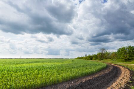 green wheat field near irrigation canal  agriculture in the countryside Reklamní fotografie