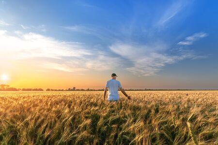 man standing on a field of wheat  evening landscape fields Ukraine Banco de Imagens