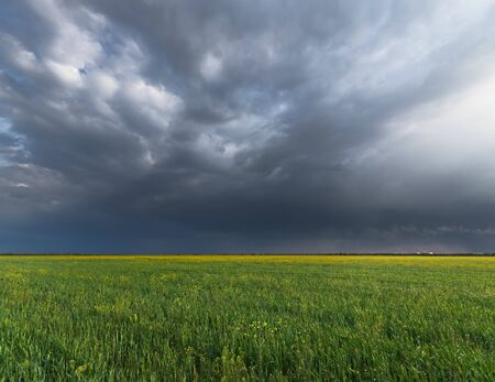 wheat field and cloudy clouds / rural landscapes 版權商用圖片
