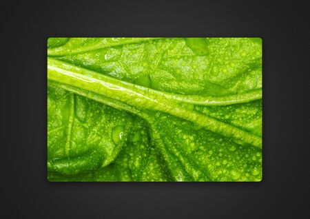 cabbage leaf close-up / background photo of Passepartout 版權商用圖片