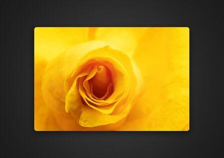 yellow rose close-up / background photo of Passepartout 版權商用圖片
