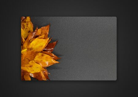 maple leaf on a grey background . Passepartout background photo