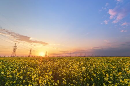 bright colorful sunset canola field power lines on sunset background