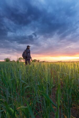 a man looks at the sunset / sunset wheat field