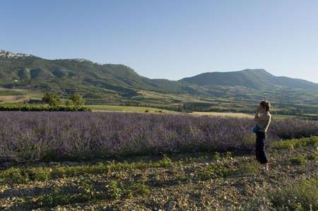 vaucluse: field of lavender toward village of Saint Savior Gouvernet - Valley of Sainte Jalle Stock Photo
