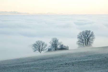 arbres: Walk on a Swiss cloud sea Stock Photo