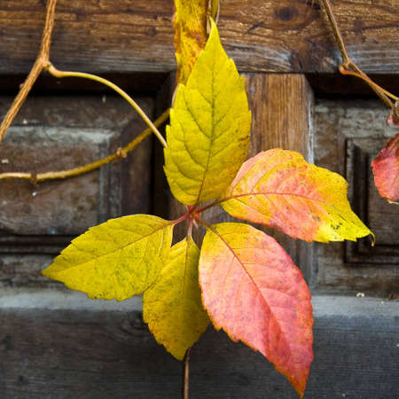 foliage of fall Stock Photo - 2155514