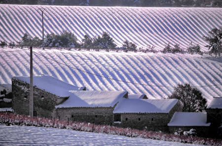 snow-covered morning before the farm photo
