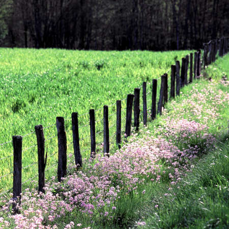 The fence of the field Stock Photo