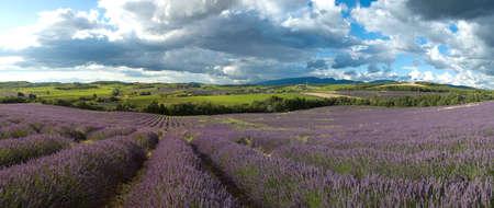 landscape field of lavender - Provence Stock Photo - 2710370