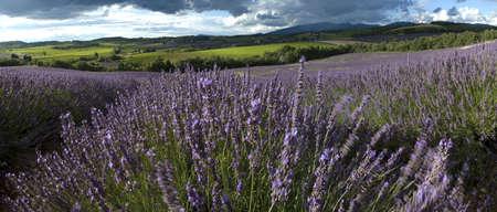 landscape field of lavender - Yards - Drome Proven�ale