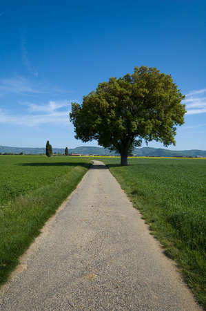the tree and the road photo