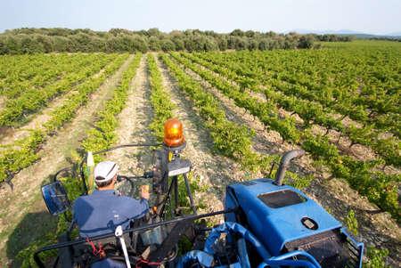 machine to harvest to work during wine-harvest