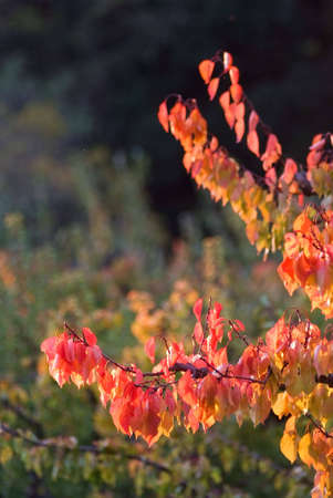 landscape of fall Stock Photo - 5874530