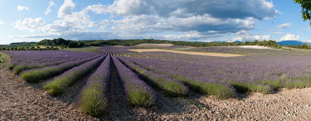 panorama field of lavender - Provence Stock Photo