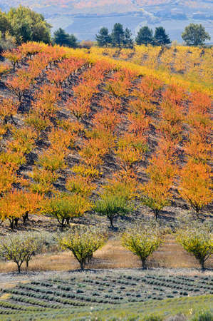 arbres: Color of fall trees greengrocer