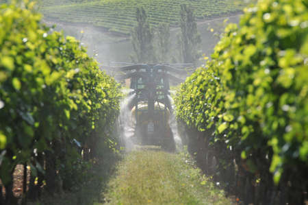 work mechanical tractor and treatment of the grapevine