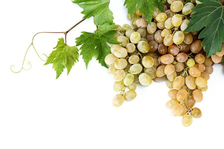 white grape: Fresh white grape with grapevine on white background