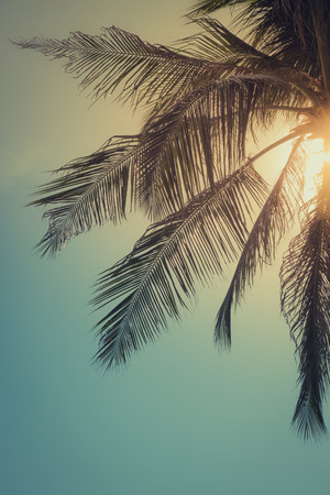 Top of palm tree with sun behind, toned