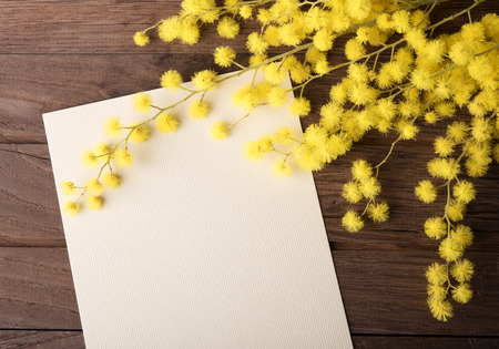 and to celebrate: Fresh mimosa flower with empty card on wooden table