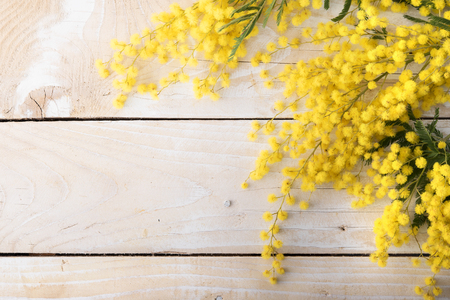 natural backgrounds: Fresh mimosa flower on wooden table with space for text
