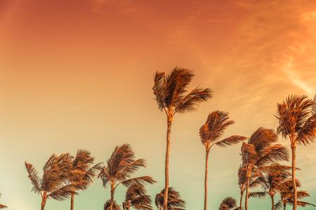 palmier: Palm de tops avec le ciel derri�re le jour venteux, tonique