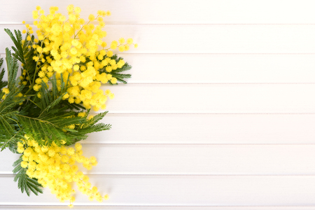 Fresh mimosa flower on wooden table with empty space