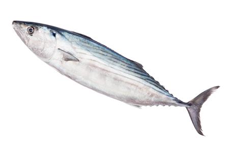 Raw fresh pelamida isolated on white background
