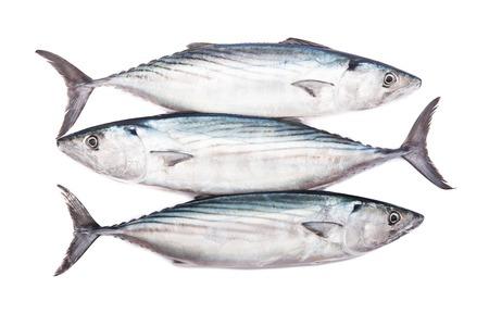 Three raw fresh pelamida on white background