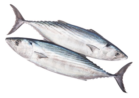 Two raw fresh pelamida isolated on white