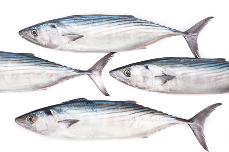 Rows of fresh pelamida on white background Imagens
