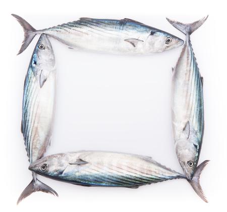 Frame from fresh pelamida on white background