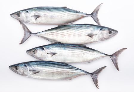 Four raw fresh pelamida on white background