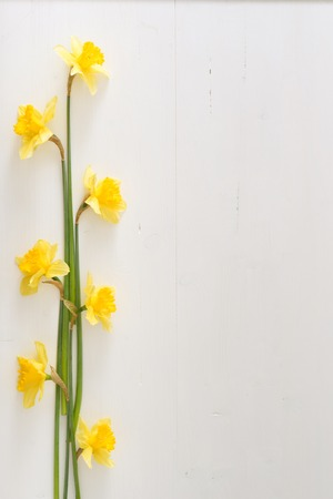 Narcissus on wooden table, bright day, empty space