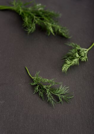 Fresh green dill on black stone surface Standard-Bild