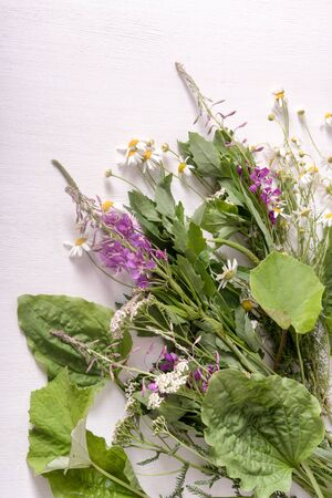Armful of fresh medicinal plants on the table