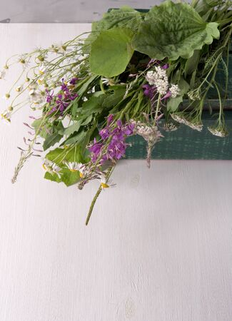 Armful of fresh medicinal plants in a box on the table Standard-Bild