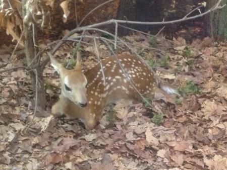 親愛なる敷設下の木の下で赤ちゃん